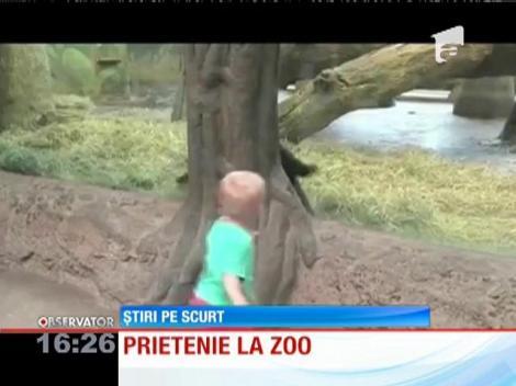 Prietenie neaşteptată între un pui de gorilă și un copil