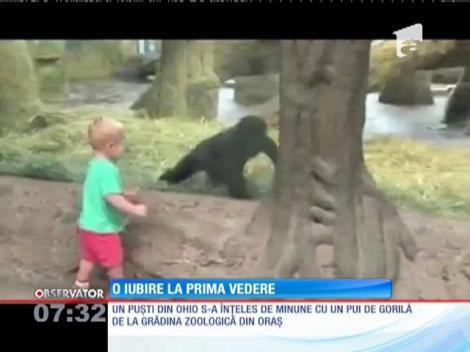 Prietenie neaşteptată între un pui de gorilă şi un băieţel