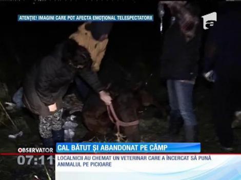 Un stăpân fără suflet şi-a abandonat calul într-o comună din Ilfov