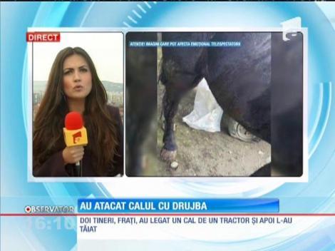 Au târât un cal cu un tractor și apoi l-au rănit cu o drujbă