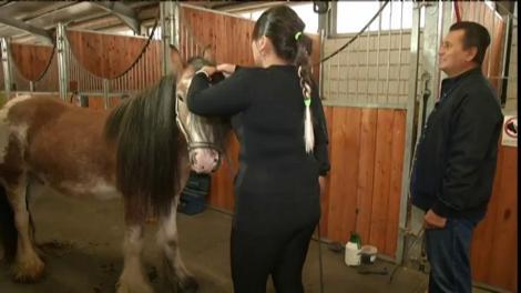"""Bianca Rus, expertă în """"horse styling""""! Vezi aici prin ce au trecut vedetele lui Nea Mărin la un centru de echitație"""