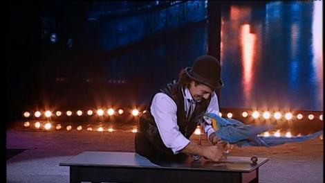 """""""Bonjour, bonjour!"""" Papagalul Cassie câștigă inimile tuturor și primește un loc în finala """"Ham Talent""""!"""