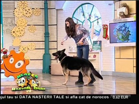 """Absolut adorabili! Teodora Dinulescu și Lord, starul de la """"Ham Talent"""", reprezentație spectaculoasă la """"Neatza"""""""