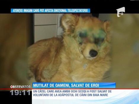 Caz de o cruzime fără margini pentru medicii veterinari din Baia Mare. Ei au salvat un câine abandonat la marginea unei păduri, bătut şi cu ochii scoşi