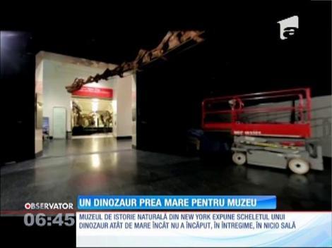 Un dinozaur prea mare pentru muzeu