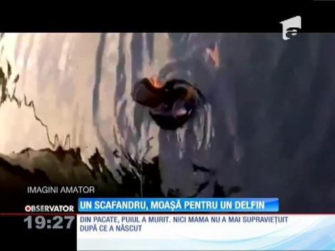 Imagini incredibile au fost filmate în portul Constanţa. Un scafandru a ajutat o femelă delfin să nască