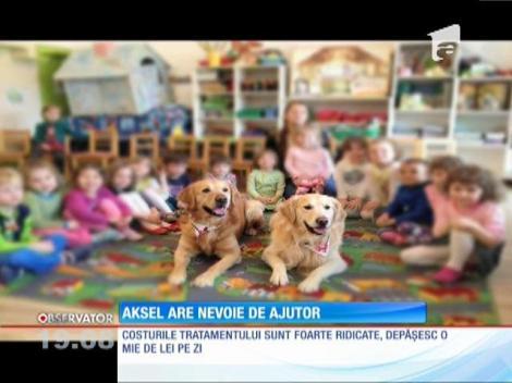 Aksel, un câine de terapie, are nevoie de ajutor