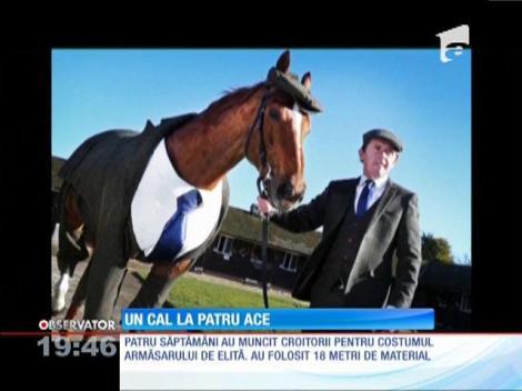 Un cal îmbrăcat în sacou şi pantalon, cămaşă albă şi cravată albastră!