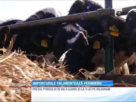 Importurile falimentează fermierii din România