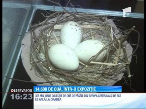 Cea mai mare colecţie de ouă de păsări din Europa Centrală şi de Est se află la Oradea