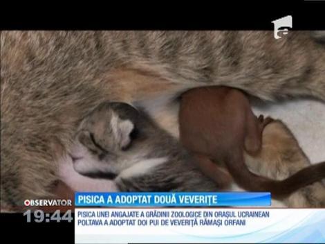 O mămică model! O pisică din Ucraina a adoptat doi pui de veveriţă!