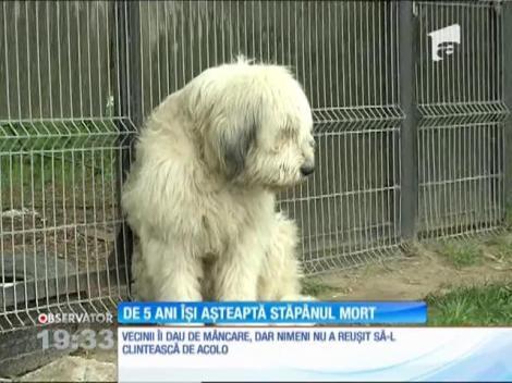 Un câine din Dolj își așteaptă de cinci ani stăpânul