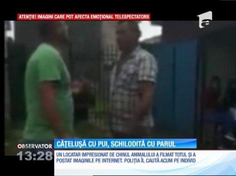 Un bărbat din Gorj este acuzat că a bătut o căţeluşă cu pui