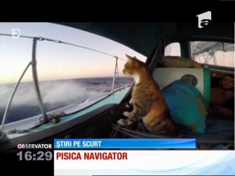 Prima pisică pirat din lume
