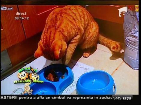 Smiley News: O pisică bine crescută