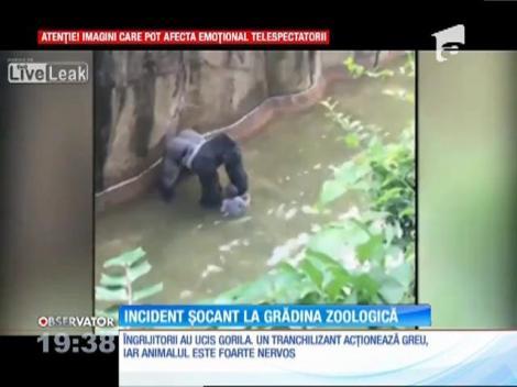 Un copil a căzut în sanctuarul gorilelor, la o grădina zoologică din oraşul american Cincinnati