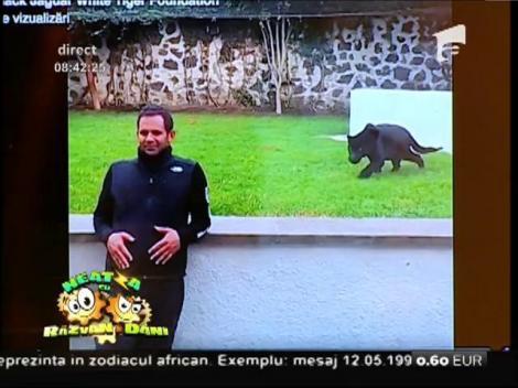 """Smiley News: Bagheera, pantera neagră din """"Cartea Junglei"""""""