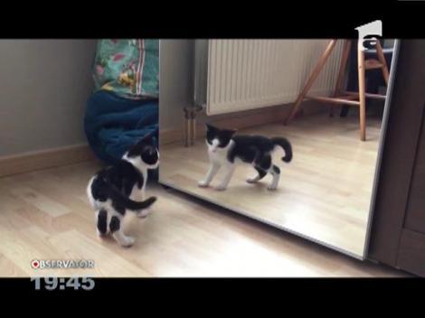 O pisicuţă, speriată de propria reflexie din oglindă