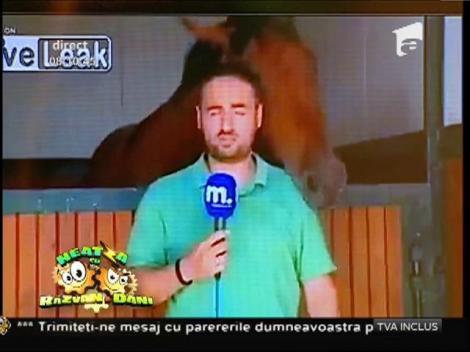 Smiley News: Interviu cu un cal