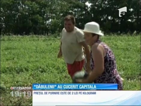 Seceta a redus la jumătate producţia de pepeni de Dăbuleni în 2016