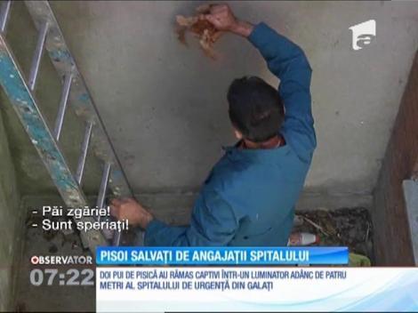Pui de pisică salvați de angajații spitalului