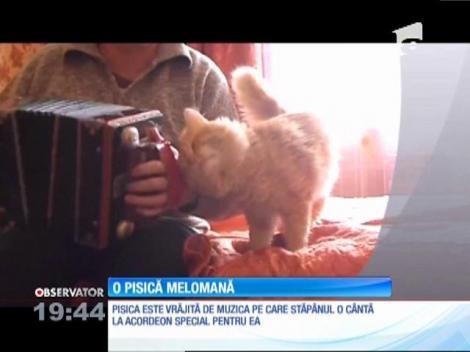 O pisică melomană