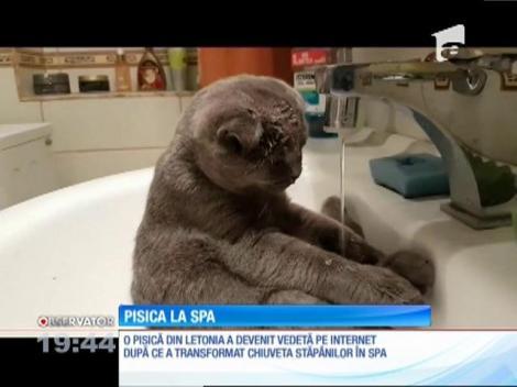 O pisica a transformat chiuveta de la baie în propriul ei SPA
