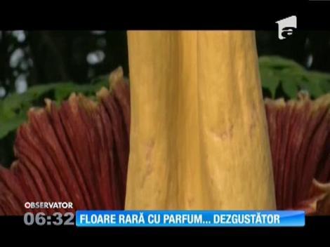 """O """"floare-cadavru"""" a înflorit pentru prima dată după 80 de ani, la grădina botanică din New York"""