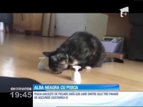 """Alba-neagra"" cu pisica"