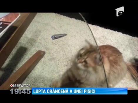Lupta crâncenă a unei pisici