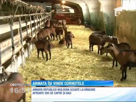 Armata Republicii Moldova îşi scoate la vânzare caprele