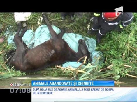 Cruzime de neimaginat. Un cal a fost torturat de mai mulţi oameni, apoi lăsat în agonie lângă un pârâu, în apropiere de Ploieşti