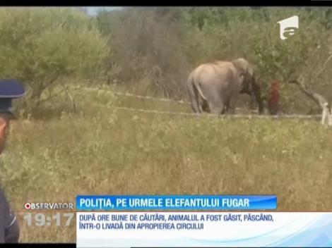Poliţiştii din Vâlcea au avut o misiune inedită: recuperarea unui elefant scăpat de la circ