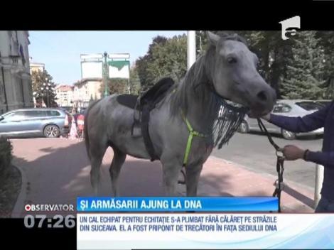 Un cal fără stăpân, complet echipat pentru echitaţie, a defilat pe străzile oraşului Suceava