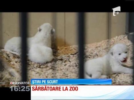 Patru lei albi, născuți la o grădină zoologică din Polonia