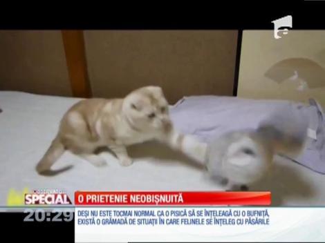 SPECIAL! Prietenie neobişnuită între o pisică şi o bufniţa