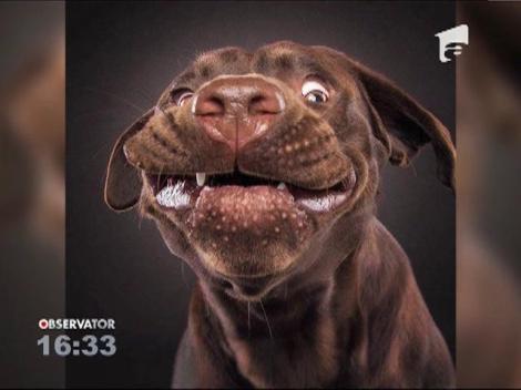 Portretul unui câine înfometat