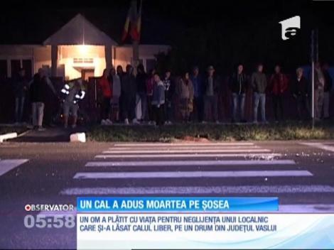 Un cal lăsat liber pe un drum din judeţul Vaslui i-a adus moartea unui şofer