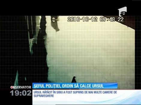 Uciderea ursului care s-a rătăcit pe străzi a fost comandată de şeful poliţiei din Sibiu