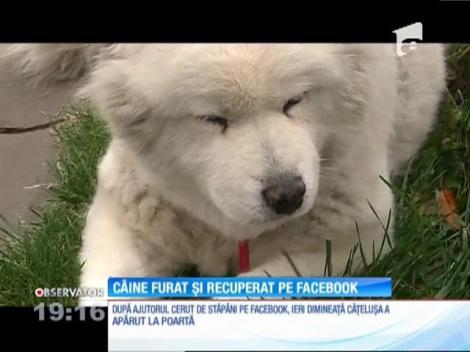 Proprietarii unei cățelușe din Constanța au cerut ajutorul pe Facebook pentru a găsi câinele furat din fața porții