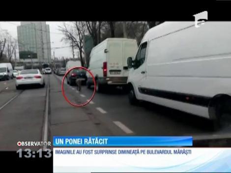 Un ponei a făcut haos în București! Animalul a atras atenția tuturor! Imagini desprinse parcă din filme! (VIDEO)