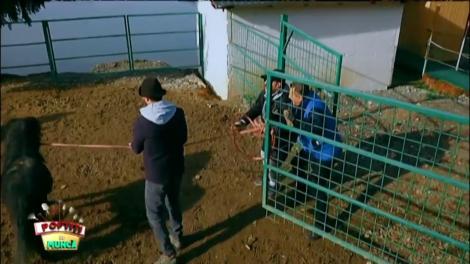 Romică Țociu refuză să stea în preajma cailor