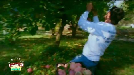 Echipa lui Nicolai Tand câștigă proba culesului de mere