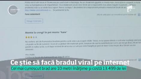 Reporterii Observator au făcut cunoştinţă cu cel mai celebru brad de Crăciun din România
