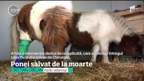 Un ponei născut cu o malformaţie gravă la un picior a fost salvat de niște medici veterinari din Cluj Napoca