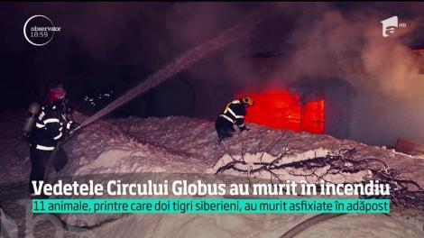 Vedetele Circului Globus au murit asfixiate în cuști!