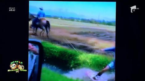 Smiley news: S-a dat cu placa pe canalul de irigaţie tras de cal!