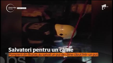 Pompierii din Buziaș au salvat un pui de câine căzut într-un puț