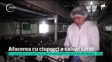 Într-un sat din Alba, locurile de muncă s-au înmulţit ca ciupercile după ploaie!