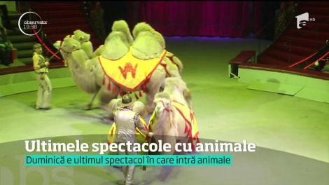 În Capitală, zilele acestea, se spune adio spectacolelor de circ. Au loc ultimele reprezentaţii cu animale